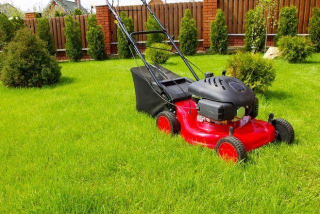 Как правильно стричь газон, изображение №6