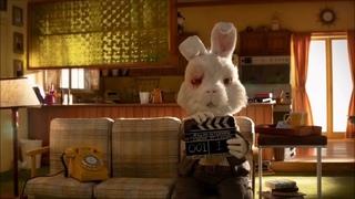 Тестирование косметики на животных, кролик РАЛЬФ