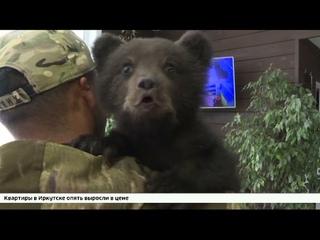 Двухмесячного медвежонка нашли на дороге и привезли в питомник «К 9»