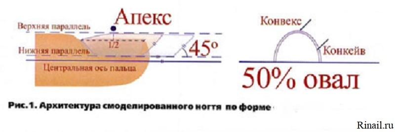 Моделирование овальной формы ногтей, изображение №2
