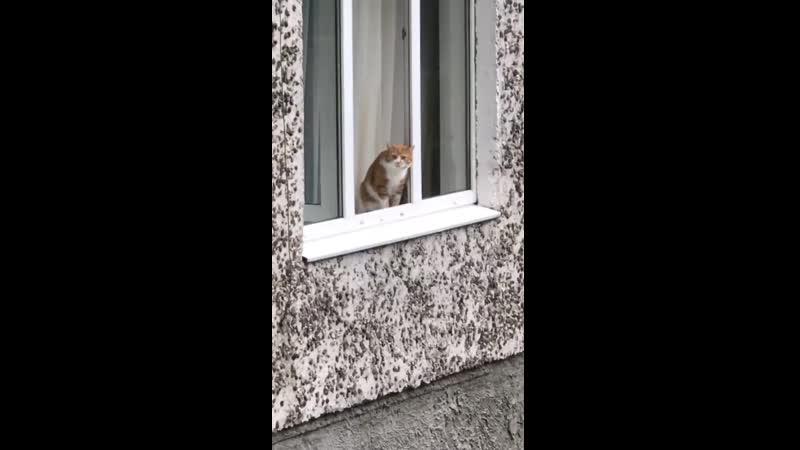 Не прыгай, кiт.. | #TikTok (видео приколы)