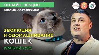 Как одомашнить котика? Онлайн-лекция Ивана Затевахина