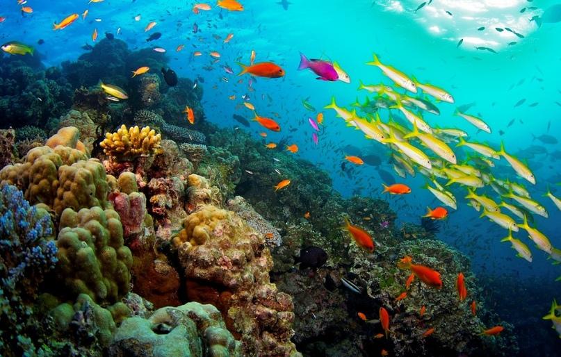 Большой Барьерный риф, изображение №2