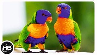 10 Самых Говорящих Видов Попугаев