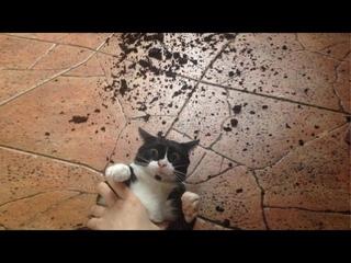 ПРИКОЛЫ С ЖИВОТНЫМИ 😺🐶 Смешные Животные Собаки Смешные Коты Приколы с котами Забавные Животные #31