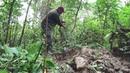 В поисках старого фундамента в лесу. Золотая лихорадка.