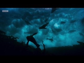 Blue Planet II Official Trailer 2 - BBC