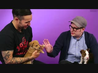 Fall Out Boy Plays With Puppies Cheeky