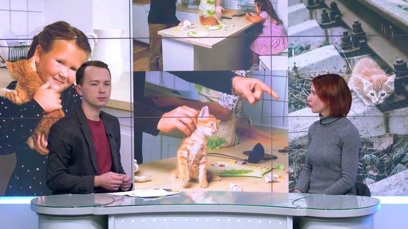Стерилизовать кошку можно за 700 рублей в Новосибирске