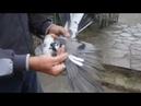 Торцовые голуби БК просмотр Ящик нам всем поможет совет от Стёпы
