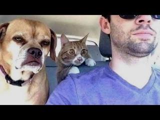 ПРИКОЛЫ С ЖИВОТНЫМИ 😺🐶 Смешные Животные Собаки Смешные Коты Приколы с котами Забавные Животные #87