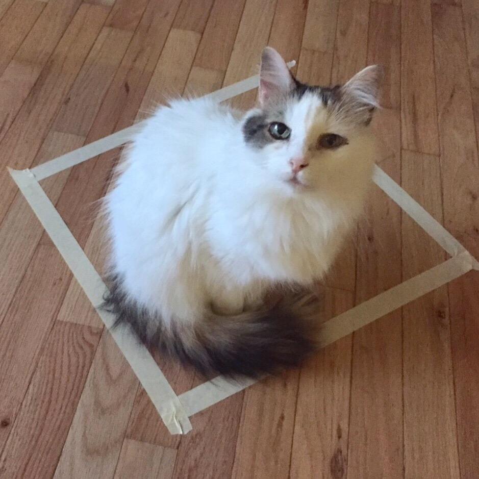 KDgOtDPQkGs - Новая фишка для котов