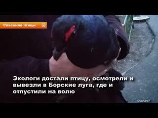 Нижегородские экологи Асхат Каюмов и Алексей Краснов спасли тетерева
