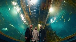 Океанариум в Сочи/Sochi Discovery World Aquarium