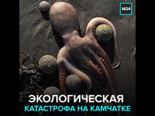 Почему на Камчатке массово гибнут морские животные  Москва 24