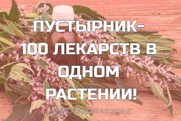 ПУСТЫРНИК- 100 ЛЕКАРСТВ В ОДНОМ РАСТЕНИИ!