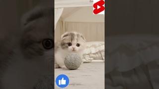 cute kitten#shorts