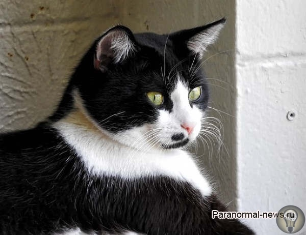 Когда нечисть в доме притворяется кошкой В доме девушки живет одна кошка, но недавно девушка стала видеть или слышать нечто, что словно притворялось ее кошкой и вело себя точно также. Она
