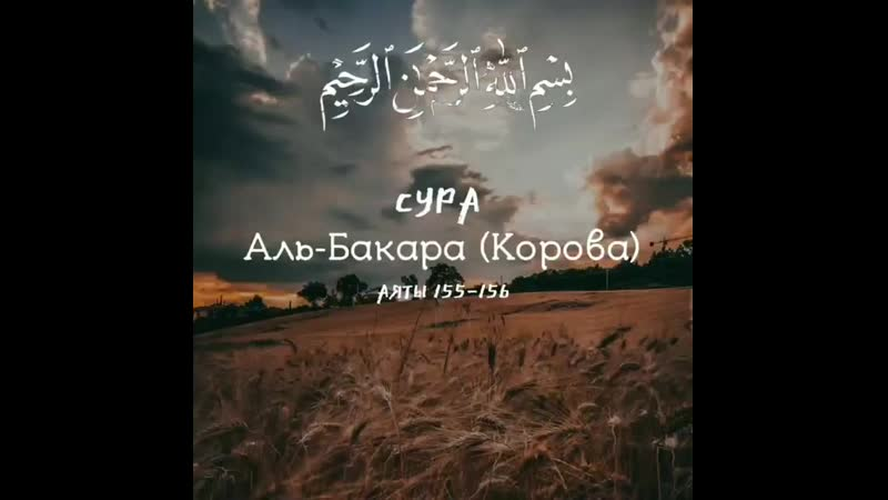Ars.k17_20200912_1.mp4