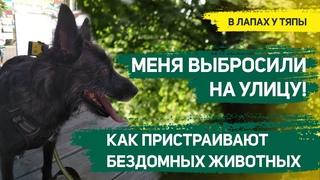 Как помочь бездомным животным? Волонтеры, передержка бездомных собак | В лапах у Тяпы: Добры канал