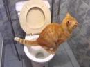 Приколы про животных кот срёт