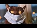 Я РЖАЛ ДО СЛЕЗ КОРОНАВИРУС лучшие приколы 2020 / ПРИКОЛЫ ПРО КОРОНАВИРУС / coronavirus