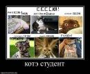 Фотоальбом Оксаны Горнушко