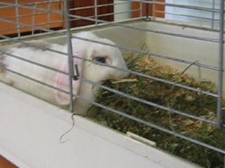 Очень-очень-очень резвый финский кролик в Ярославском зоопарке