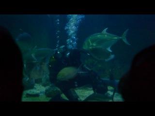 Кормлениe акул Океанариум Адлер