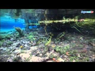 Экспедиция в Бразилию в поисках аквариумных растений и животных. Aquanet TV