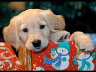 Christmas Puppy Surprise Compilation 2014-2015
