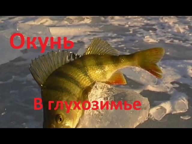 Диалоги о рыбылке 200 Глухозимье не значит безклевье
