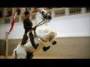 NATURE | The World Famous Lipizzaner Stallions | Legendary White Stallions | PBS