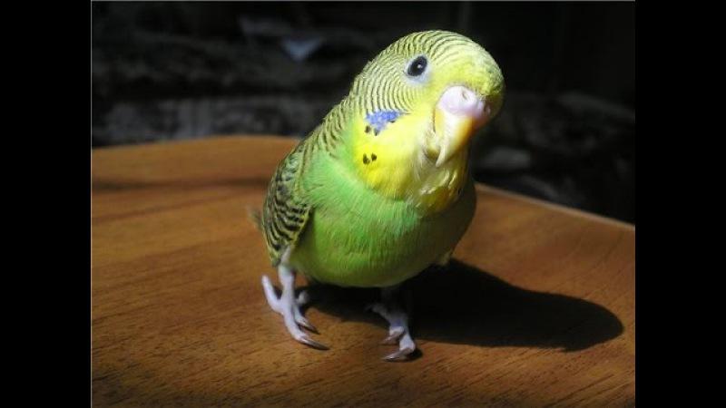 Попугаи светятся в УФ лучах?Веселая наука.серия 13 (Документальные фильмы National Geographic)