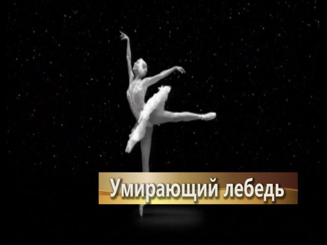 Анастасия Волочкова - Умирающий лебедь, танцует, смотреть видео, русский балет классика