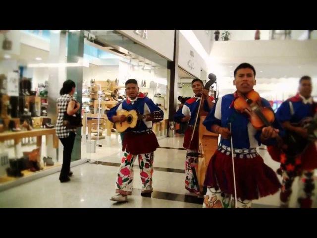 HERENCIA HUICHOL EL PASITO CHICOTEADO VIDEO OFICIAL HD