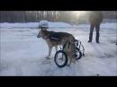 Инвалидные коляски для пожилых собак Animal Mobile