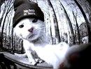 Персональный фотоальбом Артура Бикбаева