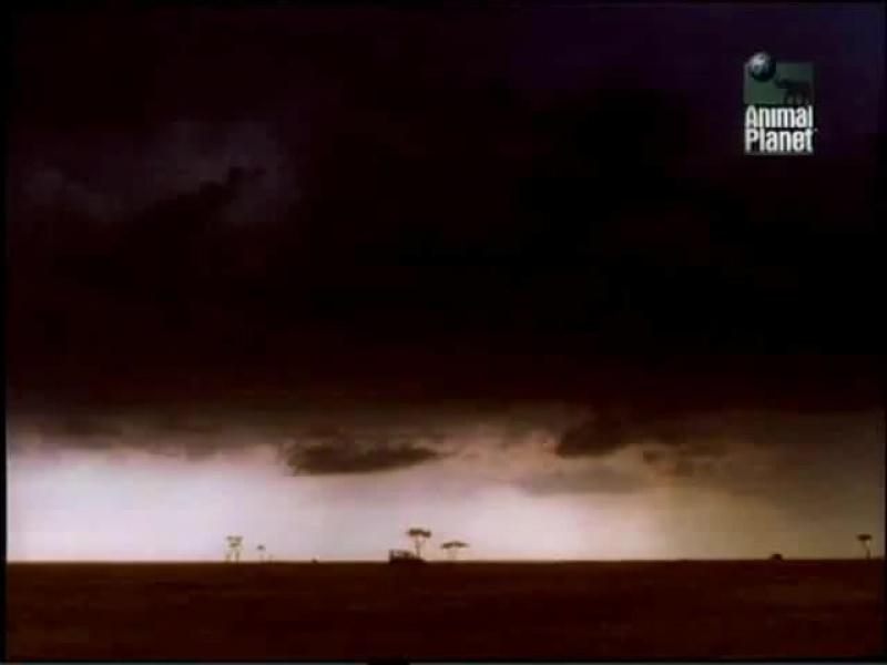 Дневник большой кошки |  Big Cat Diary. (сезон 1, серия 6)  (1996)