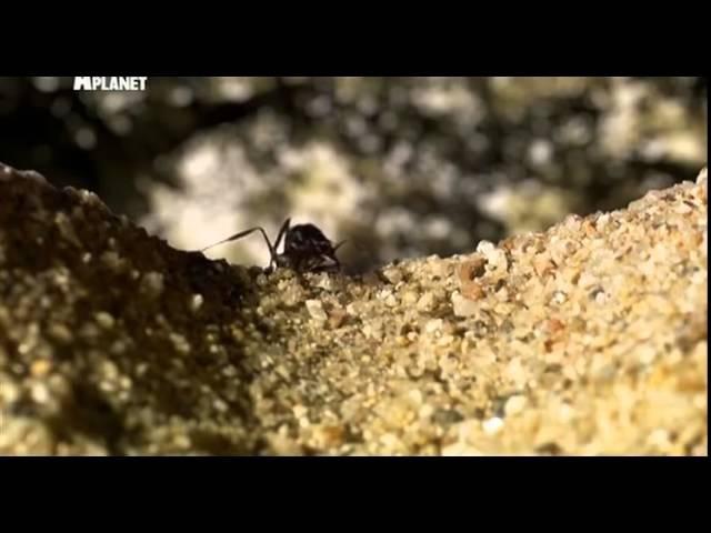Войны жуков гигантов 3