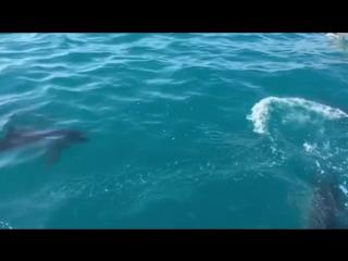 Стая дельфинов у берегов Батуми