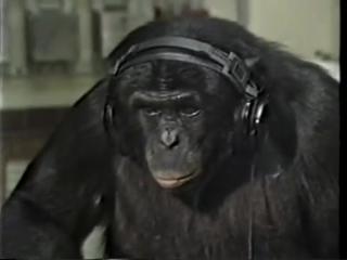 Kanzi - an ape of genius - part 1.m4v