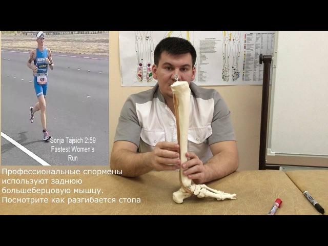 3 серия. Плоскостопие причина, упражнения для лечения плоскостопия,задняя большеберцовая мышца
