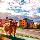 Denis Kirichkov фотография #15