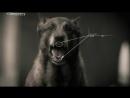 Нападение собак - Хуже быть не могло