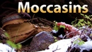 Hunting in Moccasins: care, treatment, and need to know info!