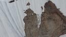 Медвежонок карабкается по склону видео сделано в Магаданской области