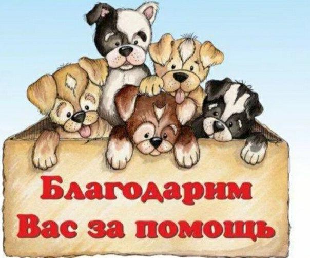 Картинка спасибо с собакой