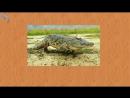 Карточки Домана Часть 3 Животные мира