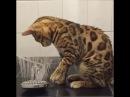 Коты, кошки, котята, еноты, лягушки и другие